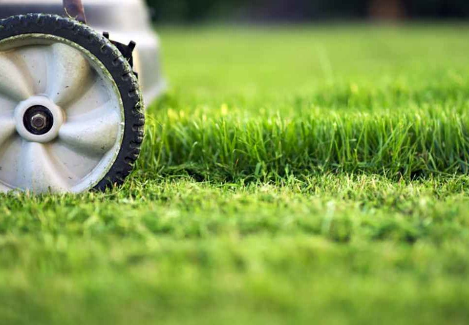 HOW TO MOW THE LAWN TIPS FROM PROFESSIONAL LAWN CARE SPECIALISTS